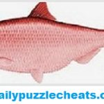 Red Herring Daily Puzzle Answers