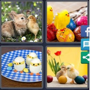 4 Pics 1 word - Chicks
